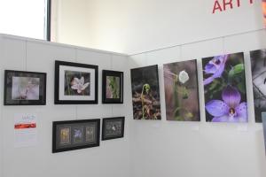 Ballarat-Art-Exhibition-Wild-Flowers-Central-Victoria