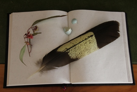 feather-eggshell-flower-resting-on-open-journal-with-blank-page-showing.