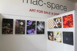Ballarat-Art-exhibition-radmac-featuring-local-wildflowers