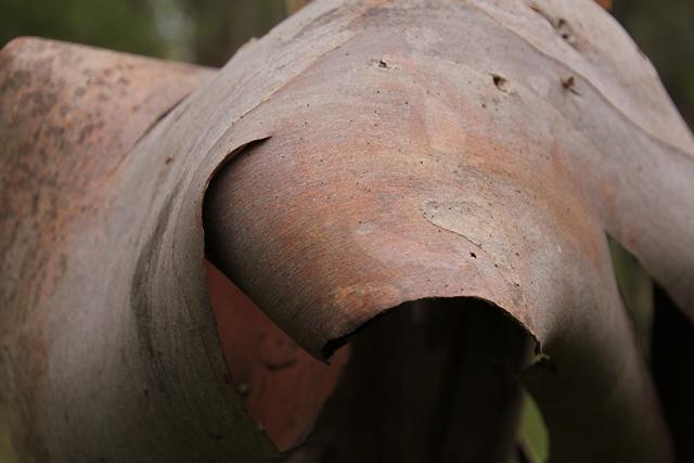 peeling-bark-in-curved-shape