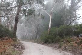 Swamp Road 09