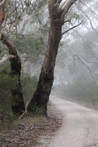 Swamp Road 02