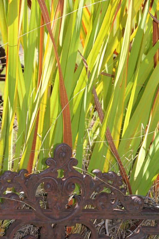 Gravestone-detail-withilluminated-leaves-Beechworth-Victoria-Australia