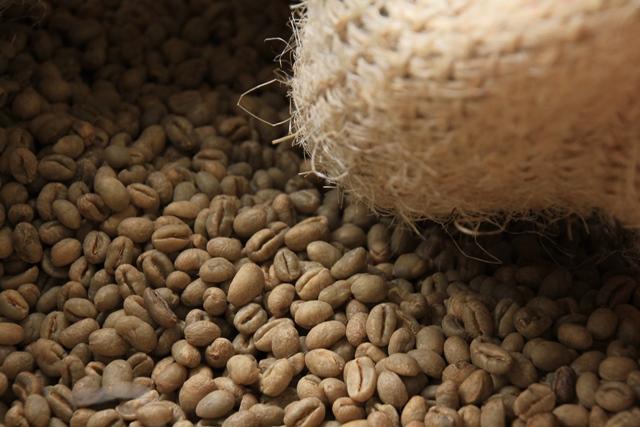 Green-coffee-beans-in-hessian-sack