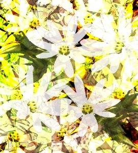 Prickly-starwort