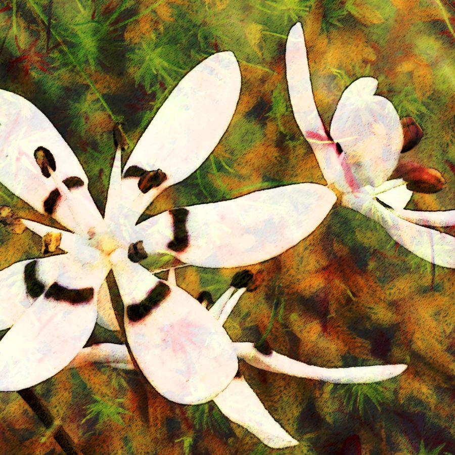 'Mossy Nancy' Digital image printed on canvas